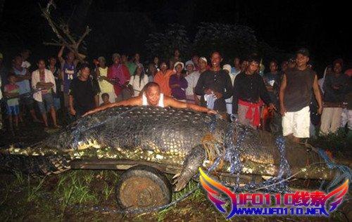 实拍历史上最大的鳄鱼被抓(视频)
