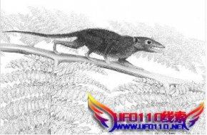 1.6亿年前侏罗兽化石