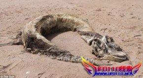 """英国海滩发现""""怪物"""""""