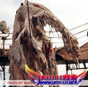 """1977年日本发现的""""海怪""""之谜"""