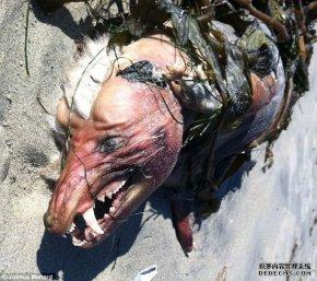 美国海滩发现巨大门牙奇怪动物尸体