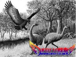 阿根廷出现史前巨鸟