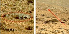 蜥蜴漫步火星震惊全球