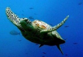 """海龟为什么要""""自埋""""?"""