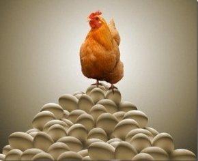 先有鸡还是先有蛋最佳回答