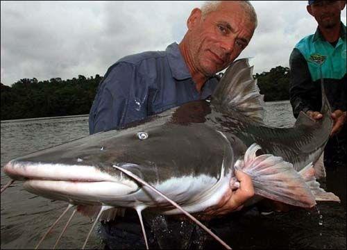 世界最大鱼视频_世界上最大的淡水鱼排行_ufo110线索网