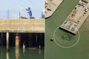 英国巨蟹二次出现是真是假|英国|巨蟹