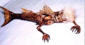 黑鳞鲛人活化石是真的存在吗?