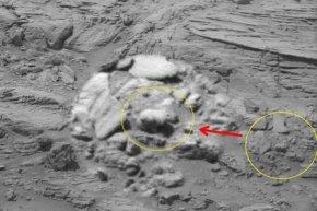 火星照片上发现熊
