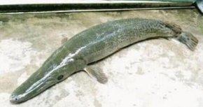 广东老渔民捉到怪鱼长长满了尖牙