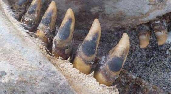 新西兰普伦蒂湾海滩出现一具神秘尸体