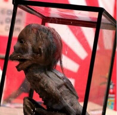 世界不存在女鬼,广东水库抓到一只女鬼是只水猴子
