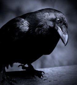 出门听见乌鸦叫真的会出死人吗