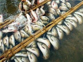 弓鱼绑鱼为什么离开水不死之谜