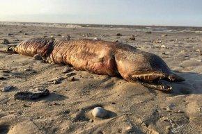 美国飓风过后得州海滩现神秘无眼不明生物