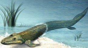 人类由鱼状蠕虫进化而来